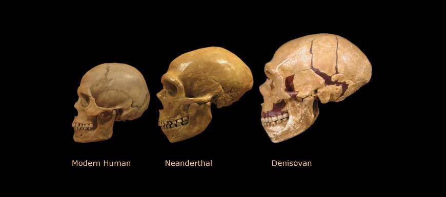 comparison denisovans where huge