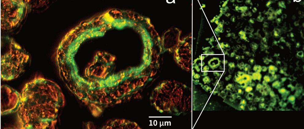 Epifluorescence imagery - life found in methane ice