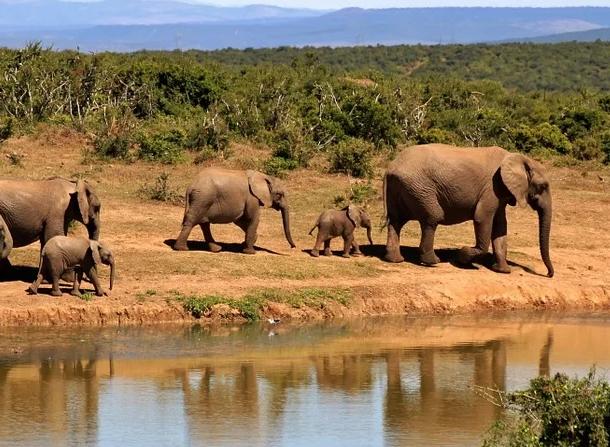 https://cdn.pixabay.com/photo/2014/03/04/15/10/elephant-279505_960_720.jpg